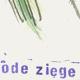 I_4_1-2_Bloede_Ziege